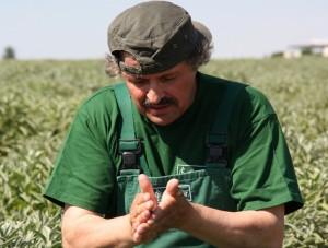 Mit viel Erfahrung bestimmt Roland Lehmann aus der Feldbauabteilung den richtigen Erntezeitpunkt. Foto: Zänker